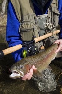 Spey Rods