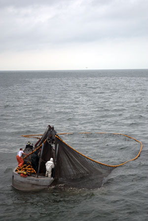 Menhaden harvesting