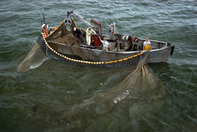 Menhaden Purse Seine Boat