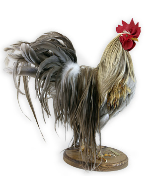 Genetic Hackle Feathers