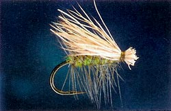 Light Elk Hair Caddis