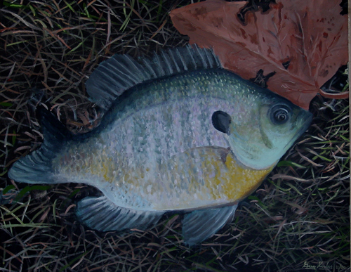 Fly Fishing Bluegill