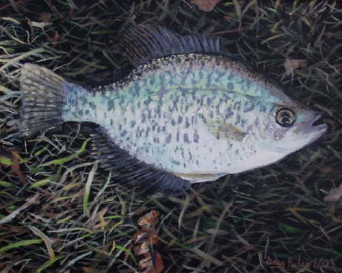 Fly Fishing OK Crappie