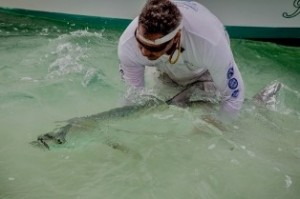 University of Miami, Tarpon Research Associate, carefully reviving a tarpon before release.