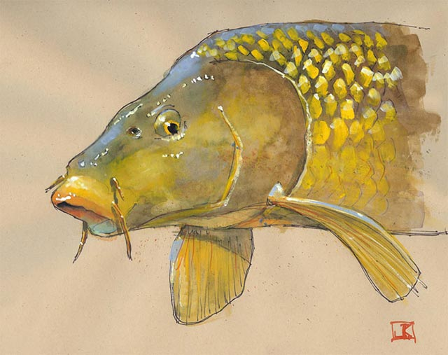 Carp Golden Bone by Jeff Kennedy