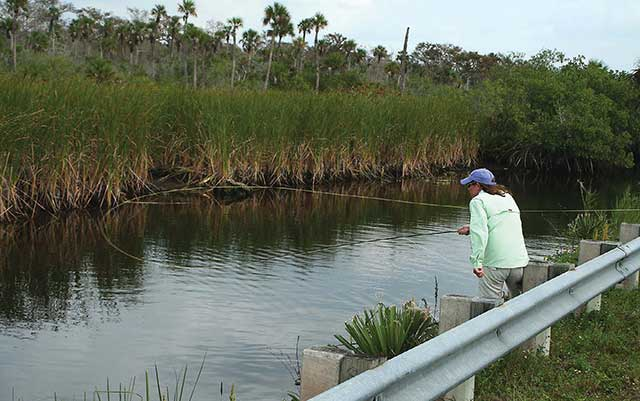 Alligator alley and tamiami trail midcurrent for Caloosahatchee river fishing