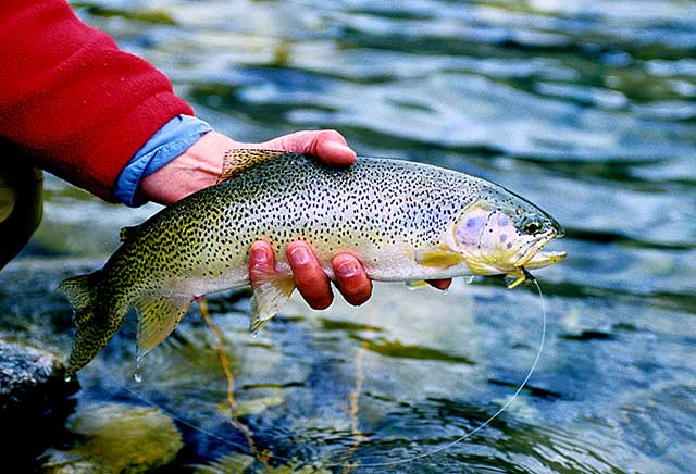 Fly Fishing with Dry Flies
